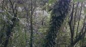 Biodiverso bosque periurbano de Xalapa
