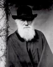 """El último """"bestseller"""" de Darwin: La formación del mantillo y las lombrices de tierra"""