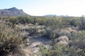 Diversidad faunística del desierto chihuahuense