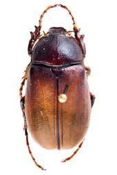 La vida de los escarabajos entre luz y oscuridad