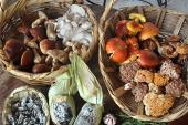 México, pueblo que come hongos, especies silvestres y cocina nacional
