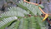 Plantas y hormigas: la ayuda mutua como lección de de vida