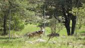 Lobos en el INECOL