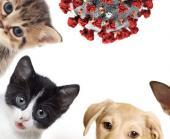 Información básica y recomendaciones de manejo de mascotas ante el COVID-19