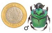 Escarabajos estercoleros: los tractores del suelo