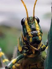 ¿Tienen personalidad los insectos?