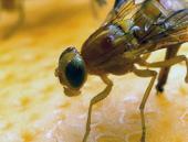 La química como herramienta para el control de plagas